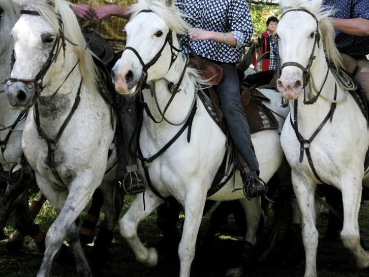 Rola i cechy konia wybranego do hipoterapii