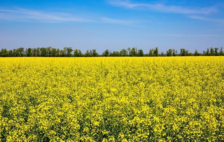 Jaka jest rola potasu w uprawie roślin?