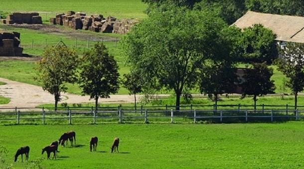 Ekologiczne mieszanki traw dla ekorolnictwa