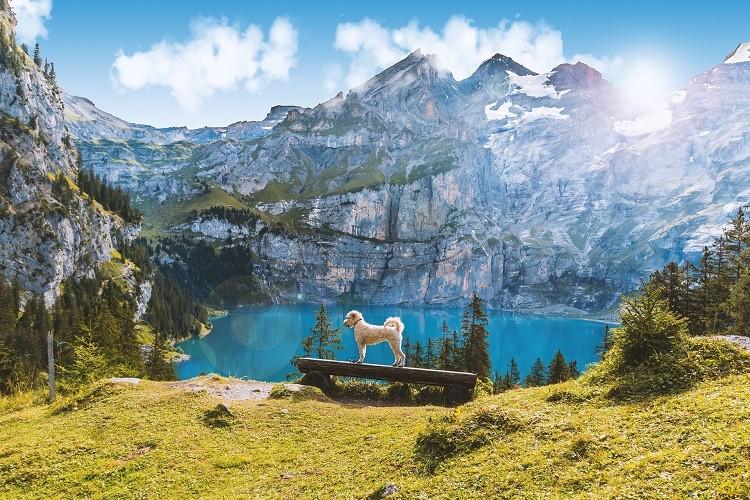 3 pomysły na przeprowadzkę do Szwajcarii