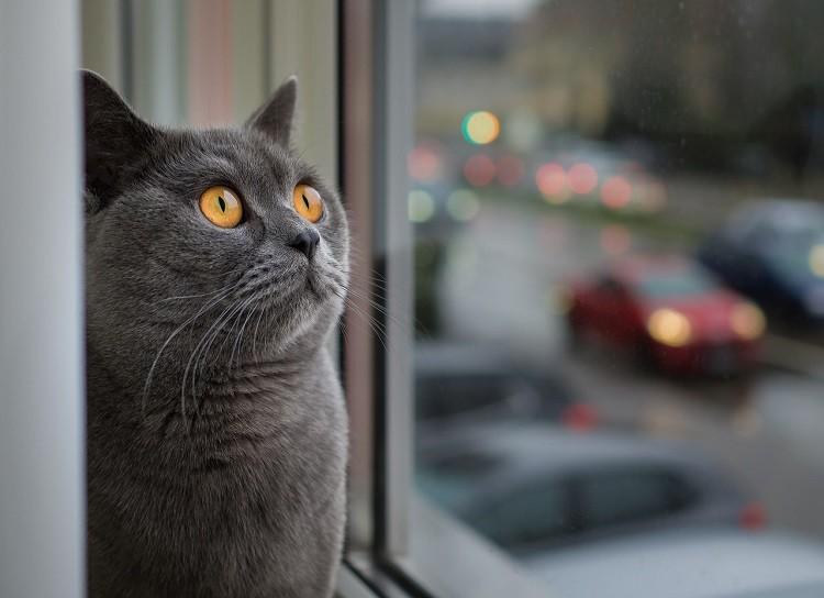 Karma dla kota – jak wybrać najlepszą?