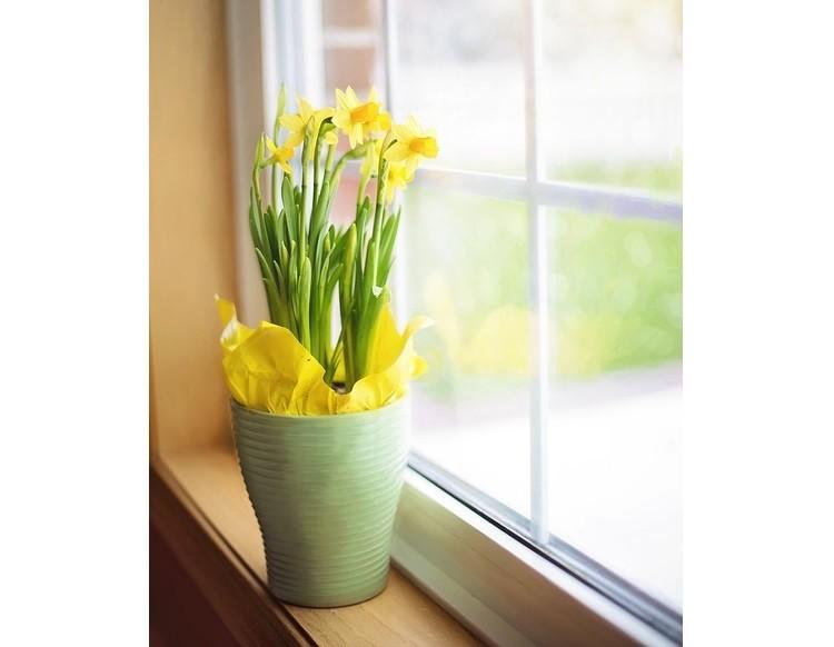 Podnieś wydajność pracy biurowej dzięki kwiatom doniczkowym!