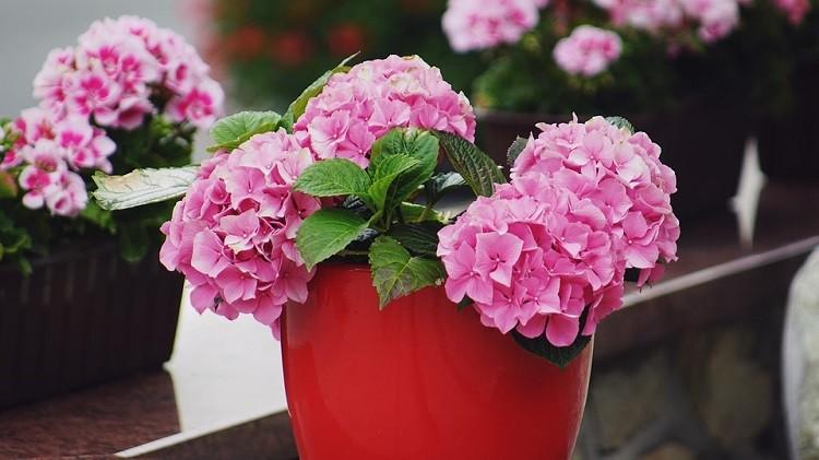 Wszystkie kolory Twojego ogrodu. Dowiedz się, jak je wykorzystać!