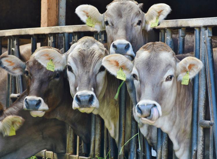 Typy szkodników w gospodarstwach rolnych