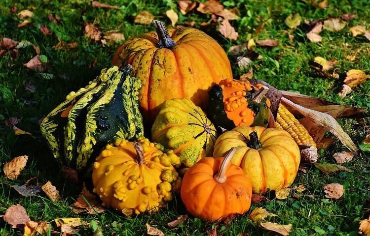 Czy można zdrowo i skutecznie schudnąć jesienią?