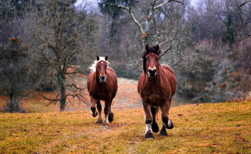 Witaminy dla koni – co powinieneś wiedzieć przed suplementacją?