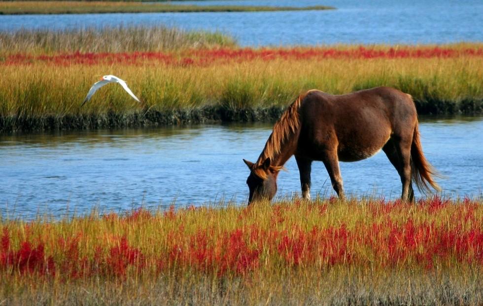 Elektrolity dla koni – kiedy są potrzebne? Jak je podawać?