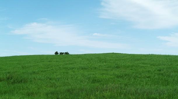 Mieszanki traw rolniczych premium – warto czy nie?