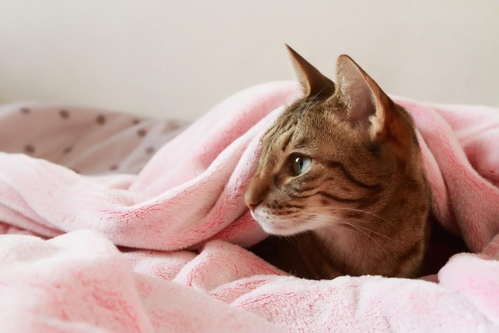 Zamykane czy otwarte kuwety dla kota – które wybrać?