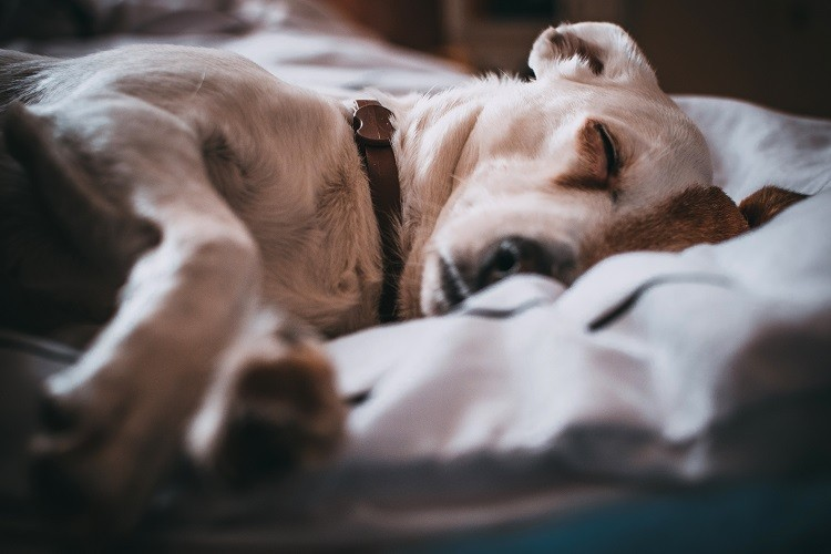 Kluczowe cechy wygodnej obroży dla psa