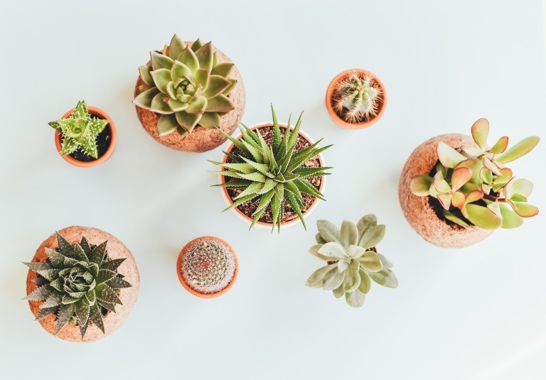 Dobre rośliny do ciemnej łazienki. Jakie kwiaty wybrać do łazienki?