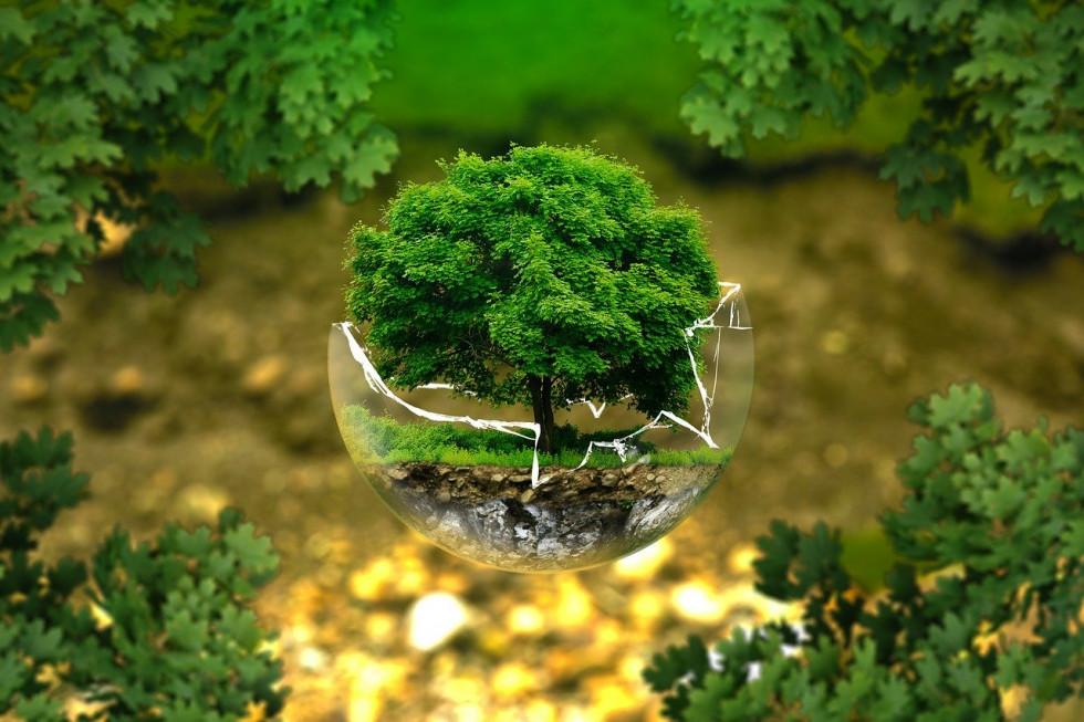 Ekologia w firmach