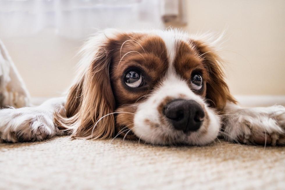 Karma dla psów - sprawdź, jak powinno wyglądać prawidłowe żywienie psa